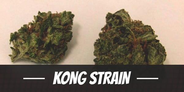 Kong Strain