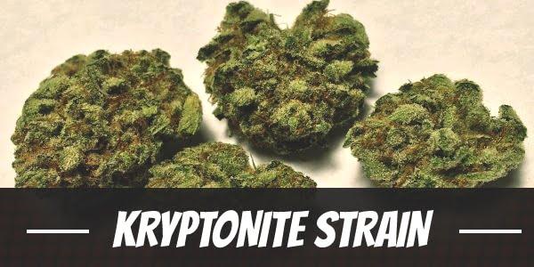 Kryptonite Strain