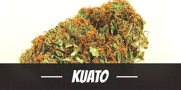 Kuato