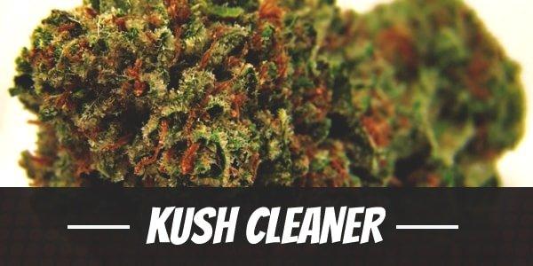 Kush Cleaner