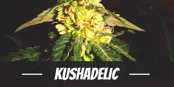 Kushadelic