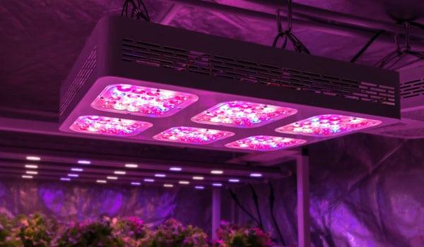 LED lights for trichomes