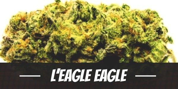 L'Eagle Eagle