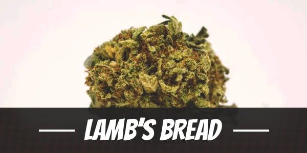 Lamb's Bread