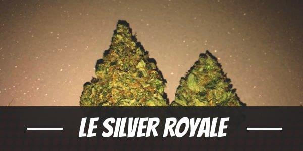 Le Silver Royale
