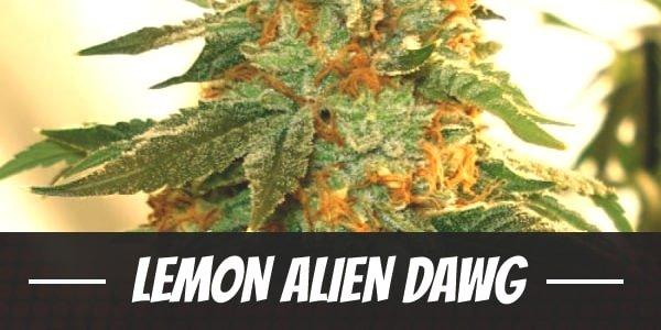 Lemon Alien Dawg