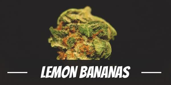 Lemon Bananas