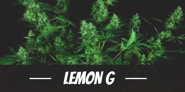 Lemon G