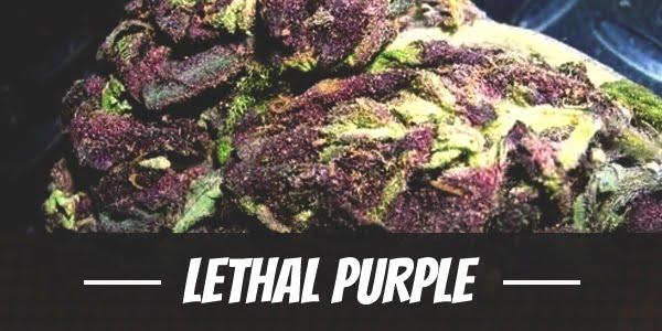 Lethal Purple