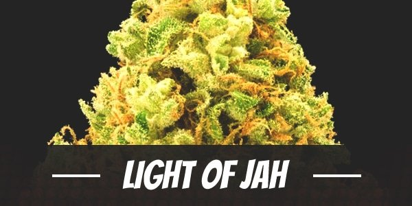 Light Of Jah