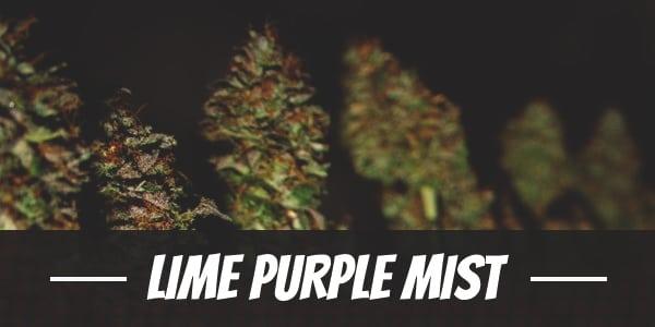 Lime Purple Mist