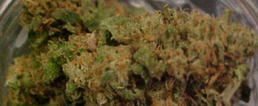 Lime Skunk Medical