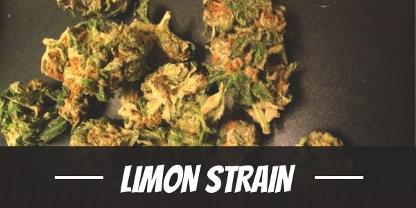 Limon Strain