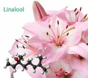 Linalool in cannabis