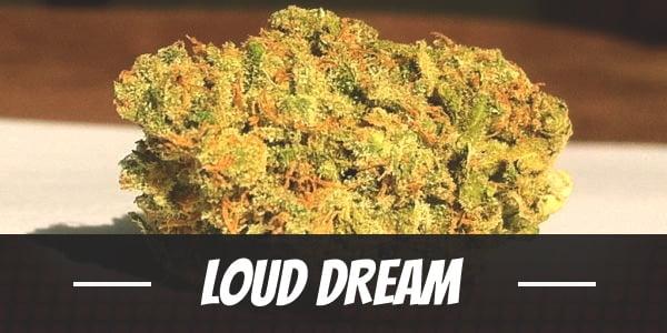 Loud Dream