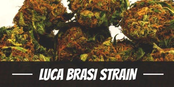 Luca Brasi Strain
