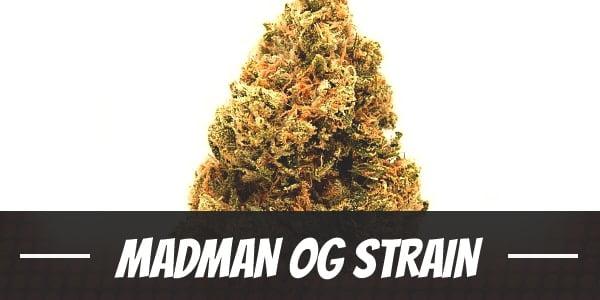 Madman OG Strain
