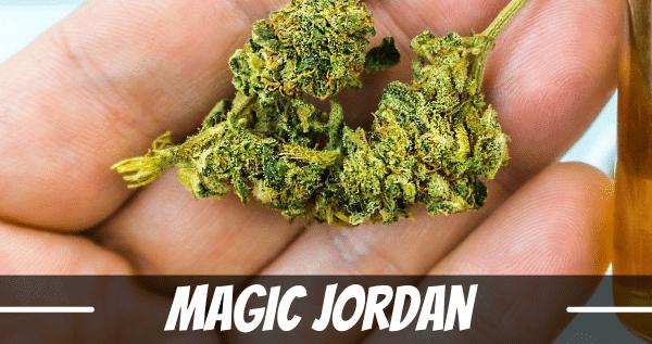 Magic Jordan strain