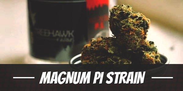 Magnum PI Strain