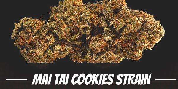 Mai Tai Cookies Strain