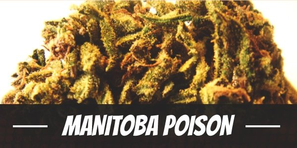 Manitoba Poison