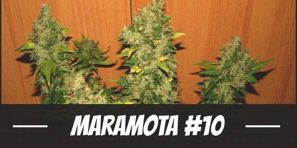 Maramota #10