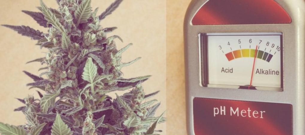 Marijuana Growing and pH