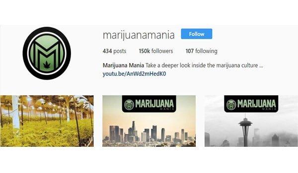 Marijuana Mania