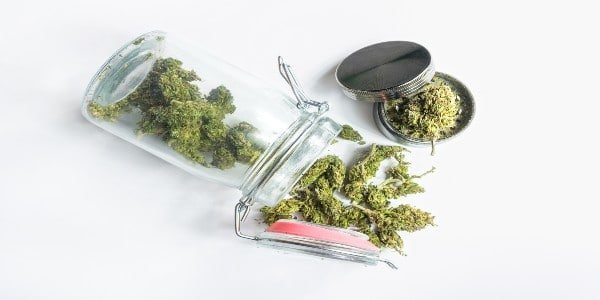 Marijuana buds in smell-proof container