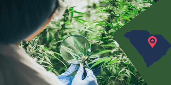Marijuana law In South Carolina