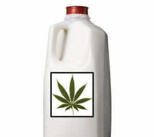 Cannabis milk or cream
