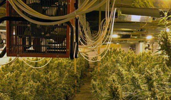 Ventilation system in marijuana grow room