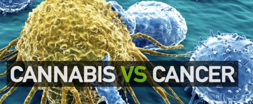 Marijuana_kills_cancer_cells