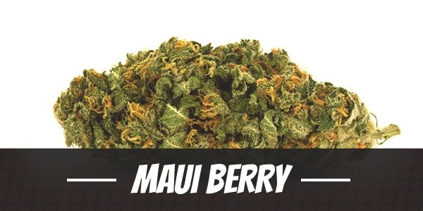 Maui Berry