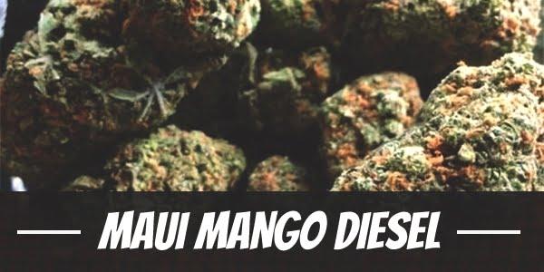 Maui Mango Diesel