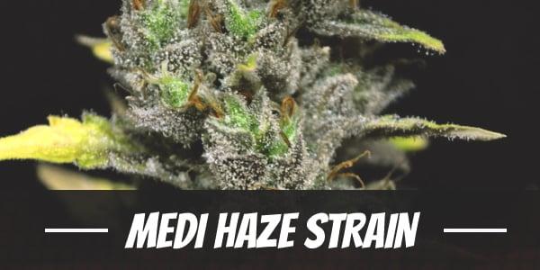 Medi Haze Strain