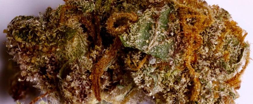Lime Purple Mist Medical