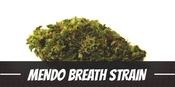 Mendo Breath Strain