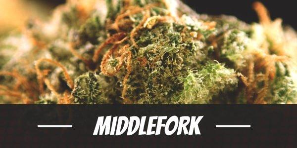 Middlefork
