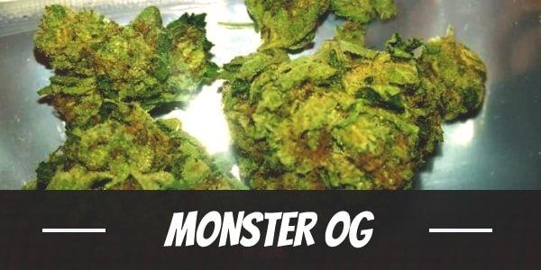 Monster OG