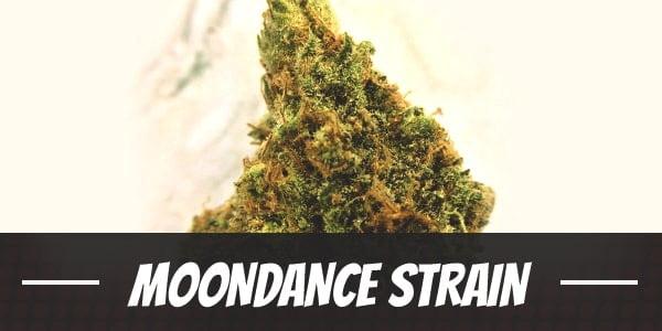 Moondance Strain