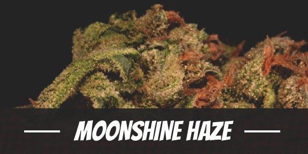 Moonshine Haze