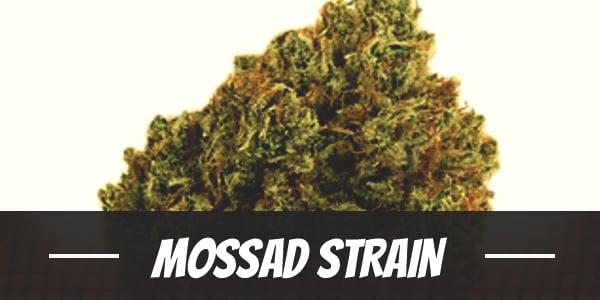 Mossad Strain