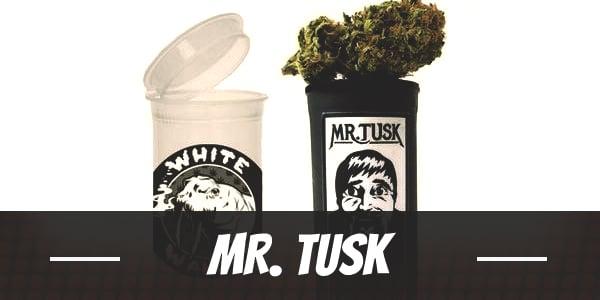 Mr. Tusk