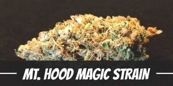 Mt. Hood Magic Strain