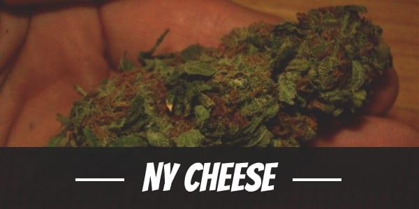 NY Cheese