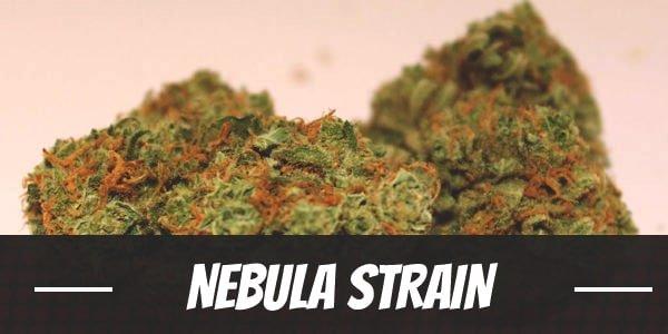 Nebula Strain