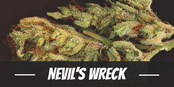 Nevil's Wreck