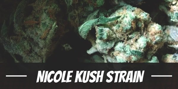 Nicole Kush Strain
