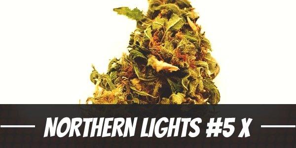 Northern Lights #5 X Haze